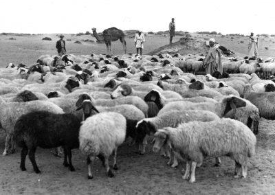 Anni 30 Case coloniche varie e agricoltura 09 F