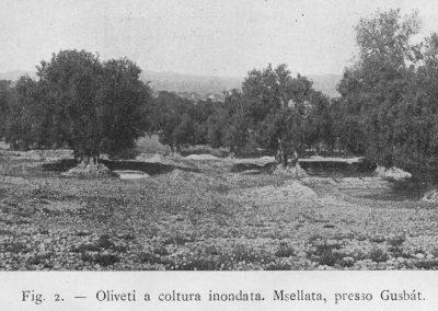 Gusbat Msellata 03 F